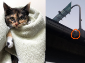 Kitty Rescued from I-380 Overpass Near SFO Up for Adoption