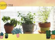 "UC Master Gardener Presentation ""Herbs and Edible Gardening"""