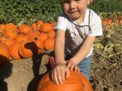 Smith Family Farm Annual Pumpkin Harvest (Sept. 25-Oct. 31)
