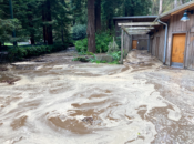 This is What Stern Grove Looks Like Now