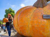 Half Moon Bay Pumpkin Festival Canceled for 2nd Year