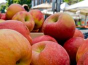 Apples & Grapes are Now at Peak Season at Your Farmers' Market