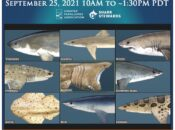 """Sharktoberfest 2021"" Bay Area Virtual Festival"